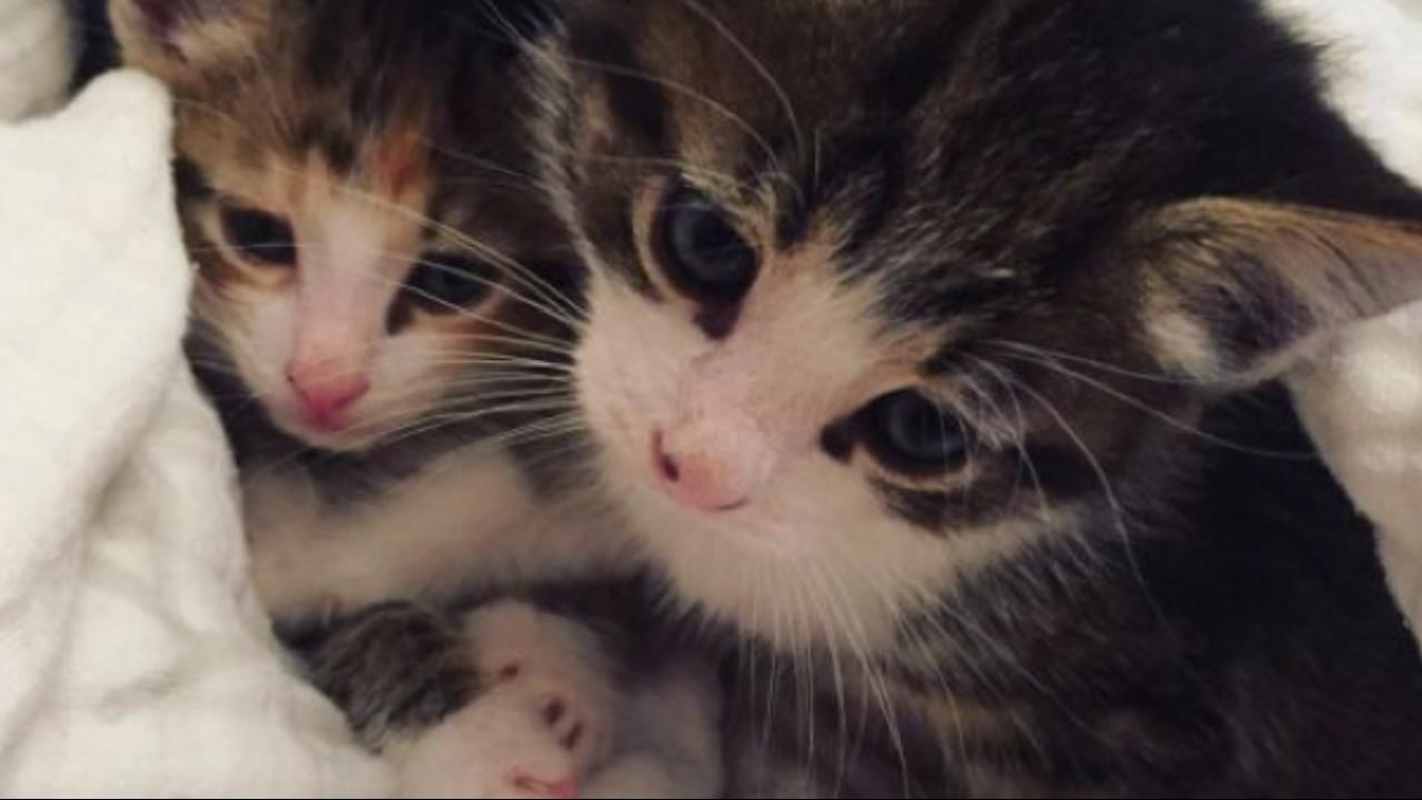 Spay/Neuter Fund for Kitten Season