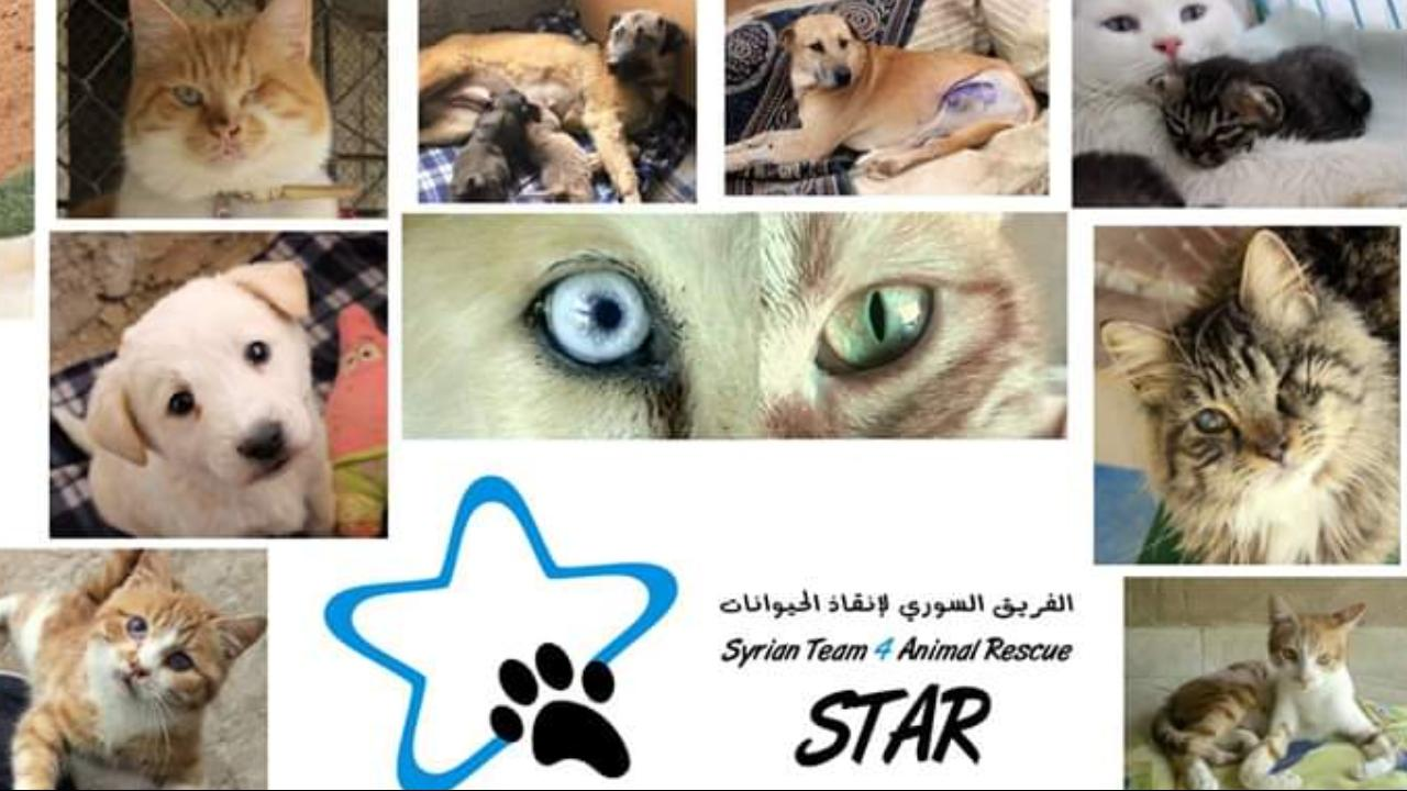 Support the continuity of an animal shelter