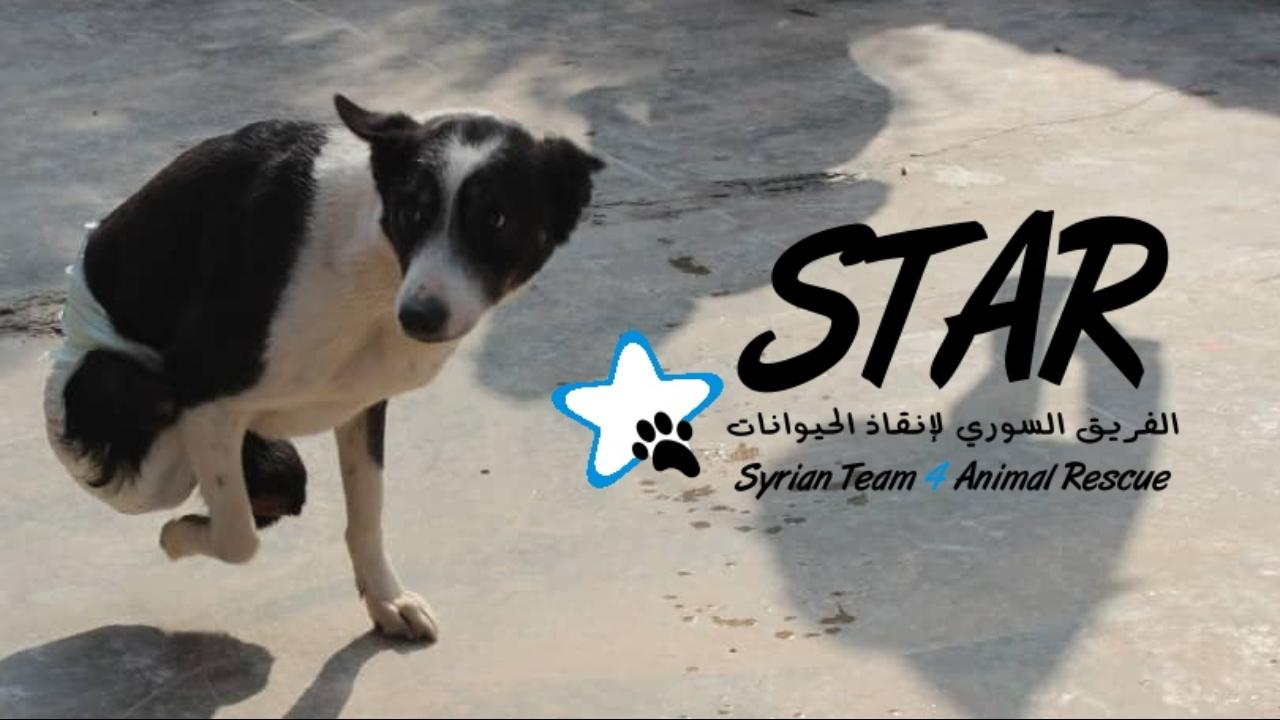 Support STAR animal sanctuary