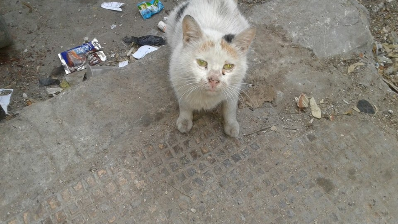 Support TNR  (Trap- spay / Neuter and Release) campaign in Syria
