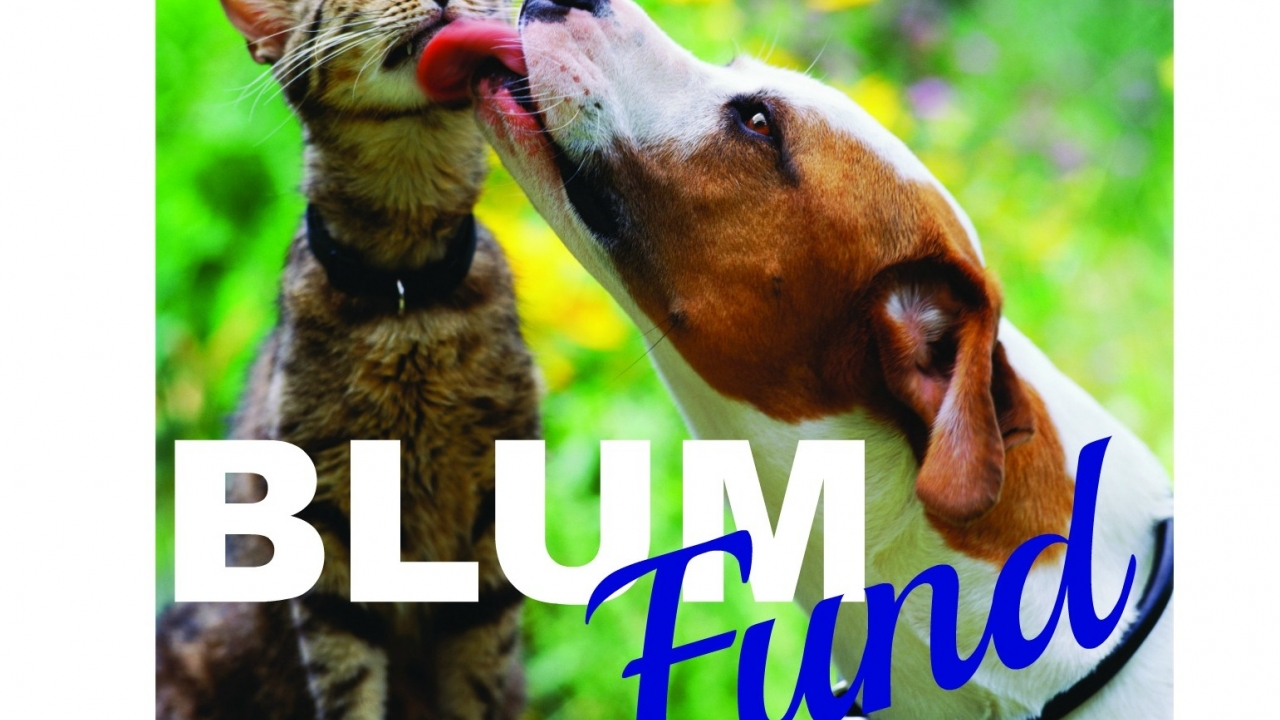 The BLUM Fund